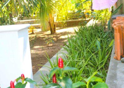 Villa Svara - Gallery - Back Garden Aloe Vera